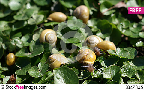 Free Group Of Snails Royalty Free Stock Photo - 8847305