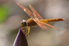 Free Dragonfly Stock Images - 8840414
