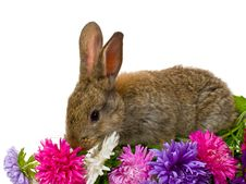 Free Bunny And Aster Flowers Stock Photos - 8843173