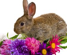 Close-up Small Bunny And Flowers Royalty Free Stock Images