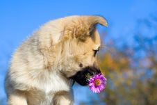 Free Puppy Dog Hold Flower In Mouth Royalty Free Stock Photography - 8844297