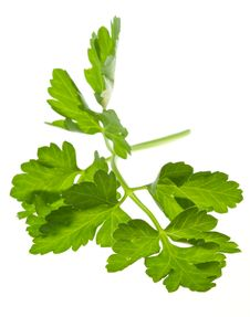 Free Sprig Of Parsley Royalty Free Stock Photos - 8844518