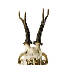 Skeleton Head With Antlers Isolated On White Royalty Free Stock Photography