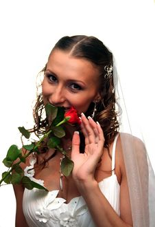 Free Bride With Rose Royalty Free Stock Photography - 8844857