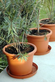 Plant Pots In Yard Royalty Free Stock Photo