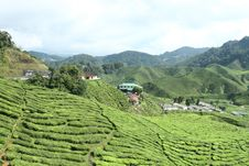 Tea Estate Royalty Free Stock Photos