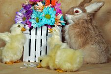 Free Spring Critters Royalty Free Stock Image - 8846896