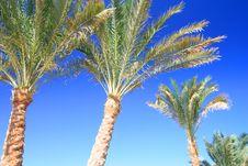 Free Palms Foliage Royalty Free Stock Photos - 8848558