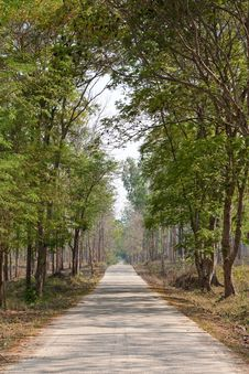 Free Road In Tropical Forest Royalty Free Stock Photo - 8848825
