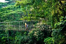 Free Person On Rope Bridge In Jungle Royalty Free Stock Photo - 88418775
