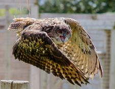 Free Brown And Beige Serpent Owl In Timelapse Photography Stock Photography - 88490142
