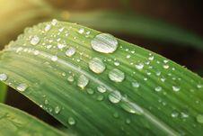 Free Raindrops On Leaf Stock Images - 88493014