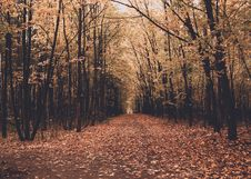 Free Avenue Between Trees In Autumn Royalty Free Stock Images - 88493219