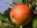 Free One Apple Stock Photos - 8854183