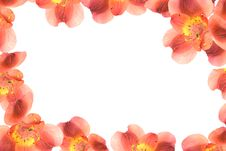 Free Flower Frame/ Border Royalty Free Stock Photo - 8850555