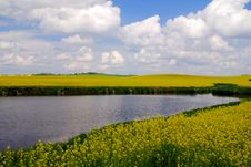 Free Rape Fields And A Lake Royalty Free Stock Images - 8850559