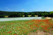 Free Spring Meadow Royalty Free Stock Photo - 8850615
