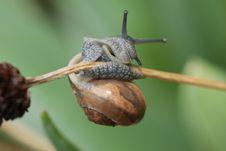 Snail Is Making Gymnastics Stock Photos