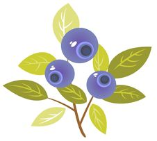 Free Bilberry Royalty Free Stock Photography - 8854097