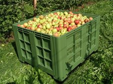 Apples In A Box 2 Royalty Free Stock Image