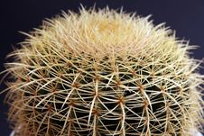 The Big Cactus Royalty Free Stock Images