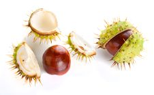 Two Autumn Shaken Chestnuts Royalty Free Stock Photos