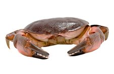 Free Close Up Of Crab Royalty Free Stock Photography - 8858507
