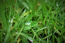 Free Green Grass Stock Photos - 88537573
