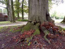 Free Interesting Tree Trunk Royalty Free Stock Photos - 88560348