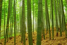 Free Arashiyama Bamboo Forest Kyoto Royalty Free Stock Photography - 88561507