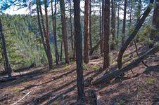 Free Secret Mountain Trail Royalty Free Stock Photography - 88561717