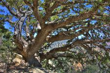 Free Tree Stock Image - 88561731