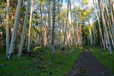 Free Inner Basin Trail Stock Photography - 88561802