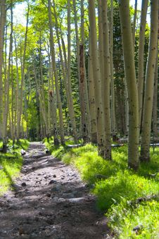 Free Inner Basin Trail Stock Photos - 88561913