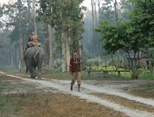 Free Taking The Elephant On A Walk, At Chilapata Forest Stock Photo - 88562060