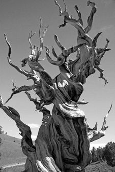 Free Greyscale Photo Of Dead Tree On Dry Land Stock Photography - 88562262