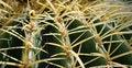 Free Barrel Cactus In Desert Stock Photo - 8860090