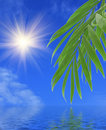 Free Green Palm Leaves Royalty Free Stock Photos - 8867858