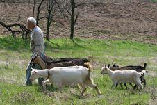 Free Herdsman Royalty Free Stock Photography - 8860007