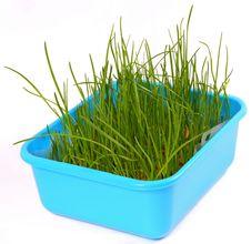 Free Grass Royalty Free Stock Image - 8860226