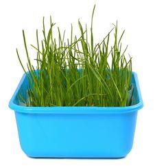 Free Grass Royalty Free Stock Image - 8860236