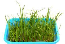 Free Grass Royalty Free Stock Photos - 8860248