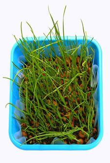 Free Grass Royalty Free Stock Photos - 8860298