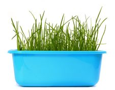 Free Grass Stock Photo - 8860320