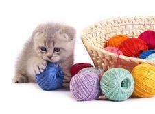 Free Kitten Stock Photos - 8861203