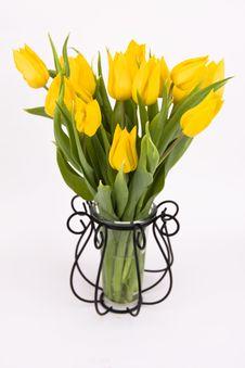 Free Yellow Tulips Stock Photography - 8861532