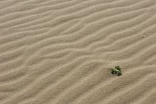 Surface Of Dune. Stock Photo