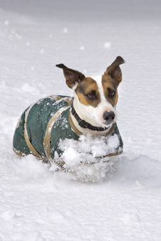 Free Dog Running In Snow Royalty Free Stock Photography - 8861927
