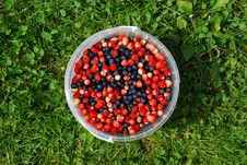 Free Berries Stock Photos - 8862643