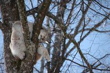 Free European Lynx Stock Images - 8863494